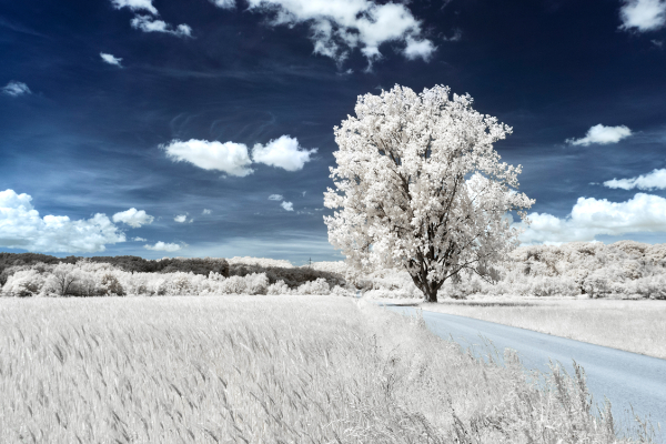 Free Surreal Backgrounds for Designers: White Tree